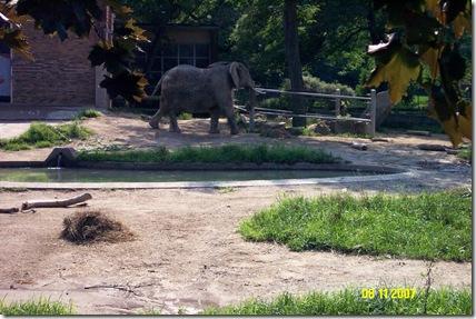 Elephant exhibit (4)