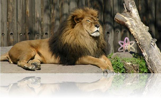 lion atheist